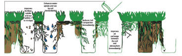 ashworthlandscapes-aeration-diagram