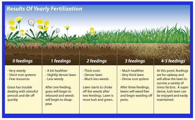 ashworthlandscapes-fertilization-diagram